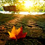 осень вдохновение